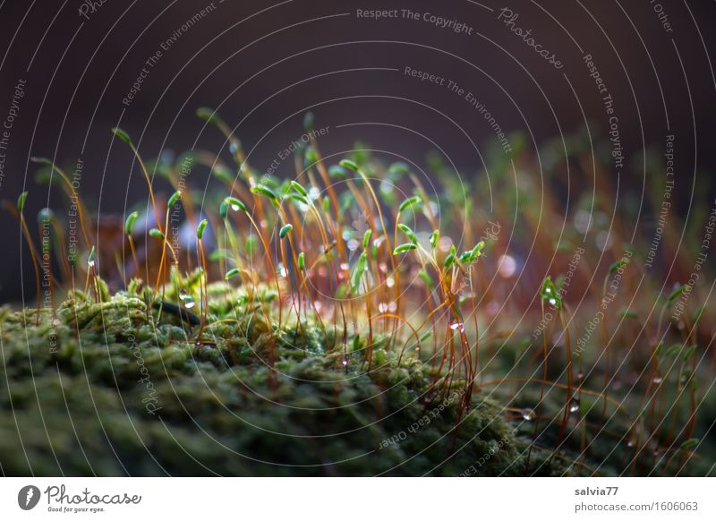 Erleuchtet Natur Pflanze grün Landschaft ruhig Wald Umwelt Frühling klein grau Stimmung braun glänzend Wachstum Erde leuchten