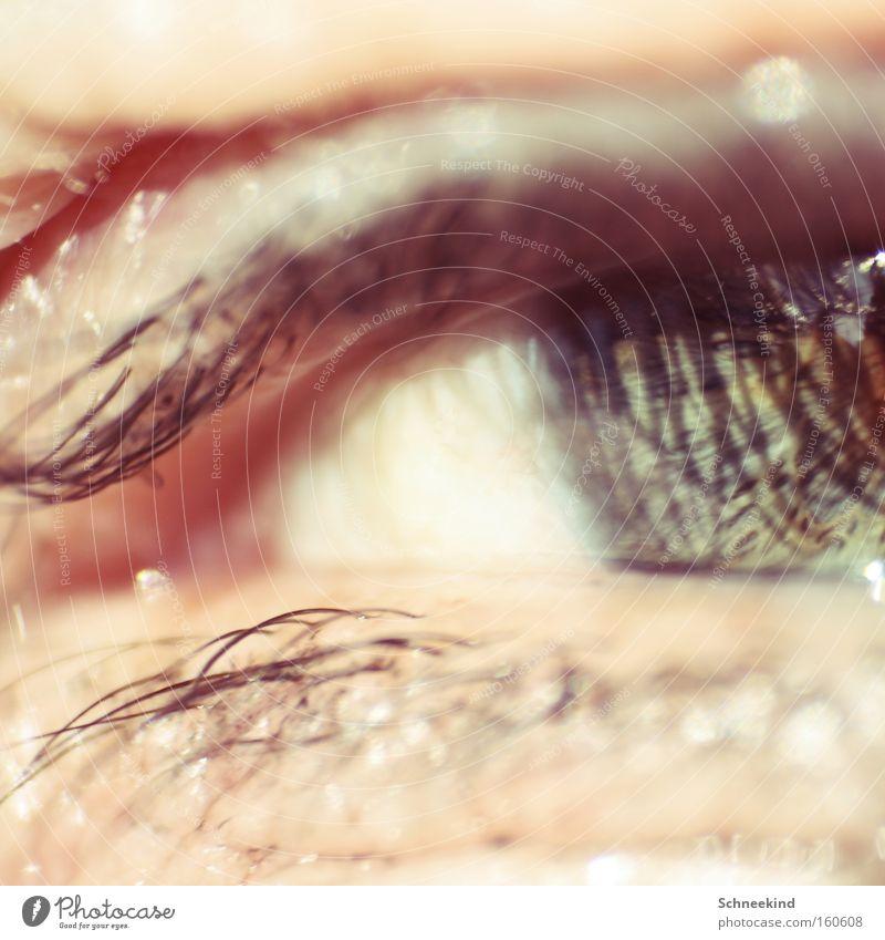 Das Auge grün Wimpern Reflexion & Spiegelung Schminke Makroaufnahme Nahaufnahme Blick Organ Schatten Haut schön Eye Haare & Frisuren Augenheilkunde