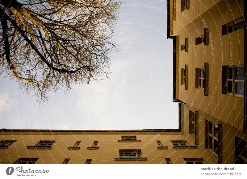 HINTERHOF Haus Gebäude Altbau Wohnung Froschperspektive Himmel blau Fenster Linie Baumkrone Ast Holz Fensterscheibe hoch