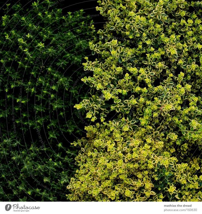 OHNE MOOS NIX LOS Natur schön Pflanze dunkel Linie hell Moos Verschiedenheit Trennung Grünpflanze Bodendecker