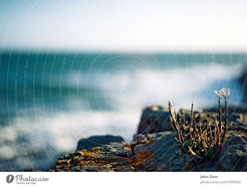 Last Plant Standing. schön Meer blau Pflanze Sommer Strand Einsamkeit Frühling Stein Landschaft Küste Felsen trist Sträucher Vergänglichkeit analog