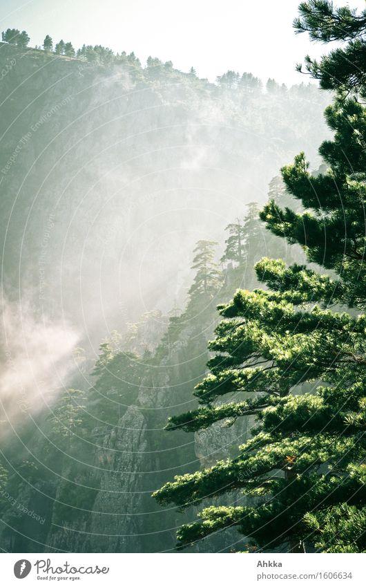 Dunstwege IV Natur Ferien & Urlaub & Reisen Baum Berge u. Gebirge Stimmung Felsen träumen Wetter Nebel leuchten fantastisch Abenteuer rein entdecken tief