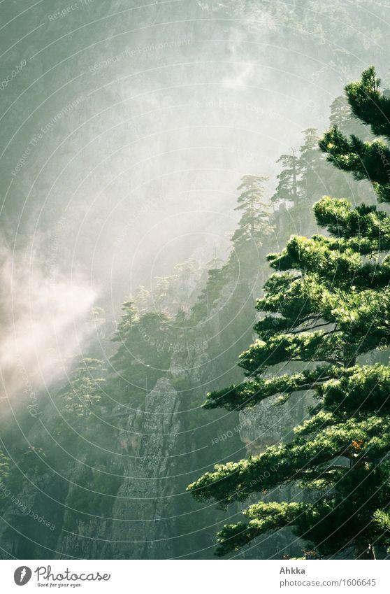 Dunstwege Ferien & Urlaub & Reisen Abenteuer Natur Sonnenaufgang Sonnenuntergang Wetter Nebel Baum Felsen Berge u. Gebirge Schlucht atmen entdecken leuchten