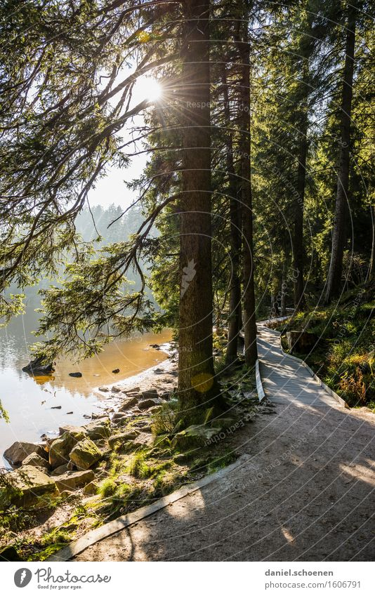 neulich beim wandern Natur Ferien & Urlaub & Reisen Sommer Erholung Landschaft ruhig Freude Berge u. Gebirge Wege & Pfade Bewegung Zufriedenheit Ausflug