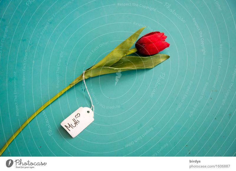 Für Mutti grün weiß Blume rot Liebe Stil Glück Feste & Feiern Schilder & Markierungen ästhetisch Schriftzeichen retro Blühend Hinweisschild Mutter Kitsch