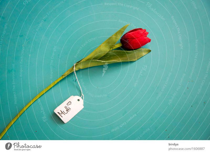 Für Mutti Stil Feste & Feiern Valentinstag Muttertag Blume Tulpe Blumenstrauß Zettel Schriftzeichen Schilder & Markierungen Hinweisschild Warnschild Blühend