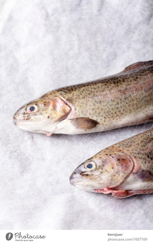 rohe Forellen auf weißem Papier rot Tier Hintergrundbild Lebensmittel frisch Küche Fisch Fleisch rustikal bereit Regenbogenforelle