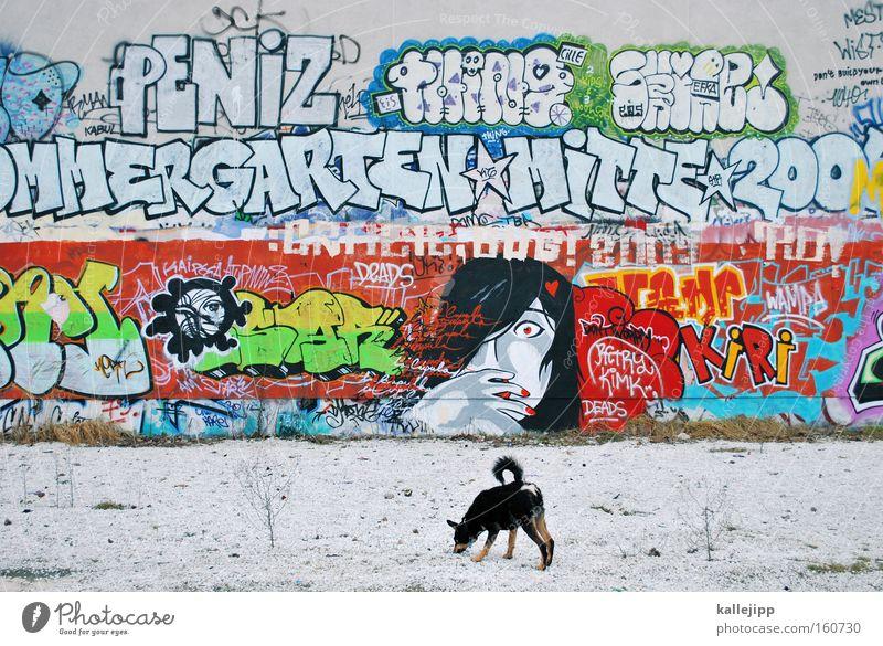 stadtaffe Graffiti Kunst Stadt Frau Hund Wand Kultur Gesellschaft (Soziologie) Schriftzeichen Schriftstück Buchstaben ungesetzlich Ghetto Säugetier Pop-Art