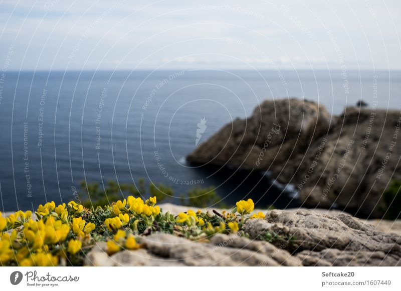 Blümchen Umwelt Natur Landschaft Luft Wasser Schönes Wetter Blume Felsen Fröhlichkeit blau gelb grün Mallorca Farbfoto Außenaufnahme Textfreiraum oben