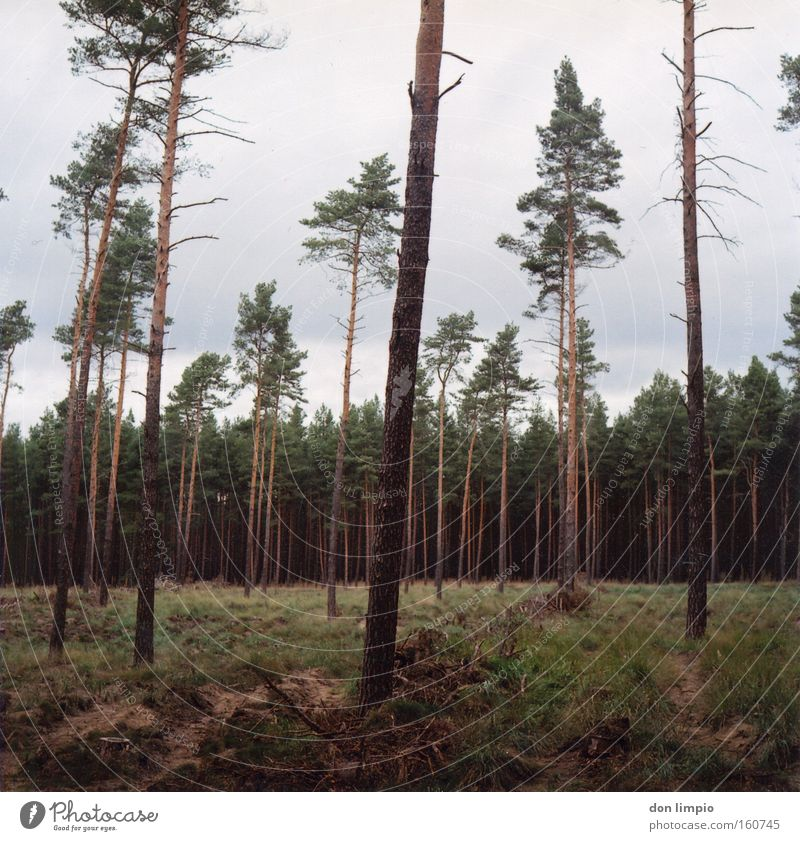 ein Stück Wald kaufen? Baum Baumstamm Waldlichtung Gras Abholzung Waldsterben Natur grün kahl Brennstoff Mittelformat analog