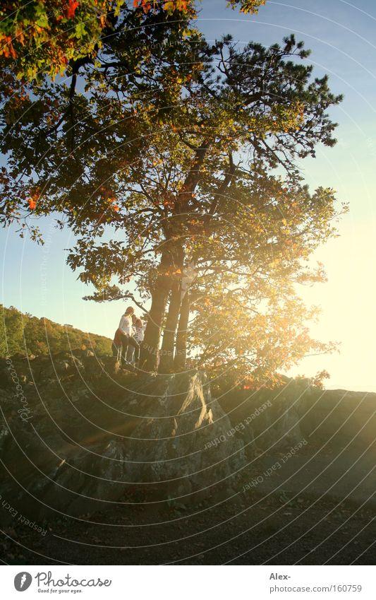 Neigung zum Licht Baum Sonne Sommer Blatt Herbst Wärme USA Virginia Richmond Charlottesville