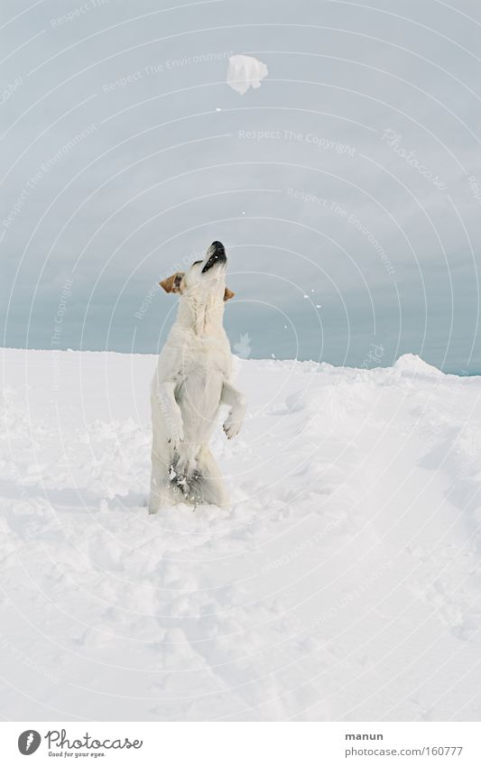 Playball Hund Winter Freude Schnee Spielen Bewegung Glück springen Schneefall Gesundheit Kraft Fröhlichkeit Fitness Lebensfreude Haustier
