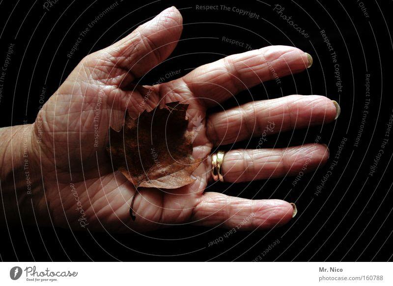 hands of time alt Hand Blatt Herbst Leben Senior Finger Trauer Vergänglichkeit Falte Ruhestand Verzweiflung Mensch Weisheit Schwäche labil