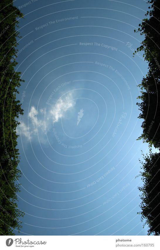Zwischen Hecken Natur Himmel grün blau Sommer Freiheit Wege & Pfade Park Aussicht Frankreich Geometrie Hecke Irrgarten