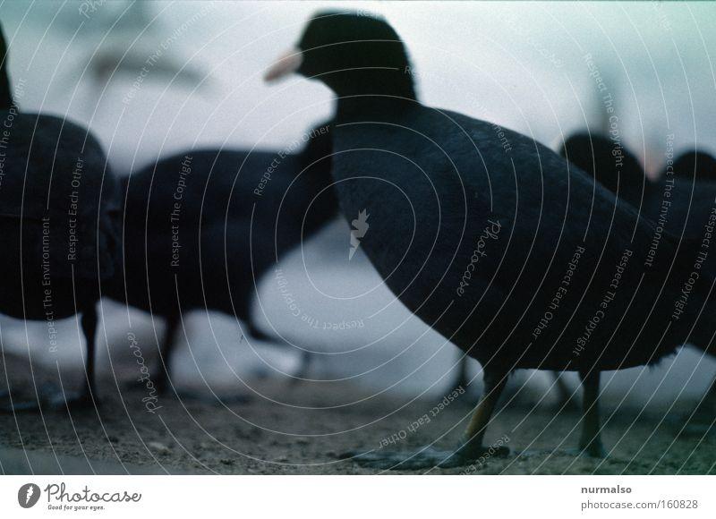 Ganz unten Boden Erde Ente nah Natur Vogelschwarm Schwarm Versammlung Zusammensein Futter Tierfuß Beine Makroaufnahme Nahaufnahme Fluss Bach Schwimmhaeute Havel
