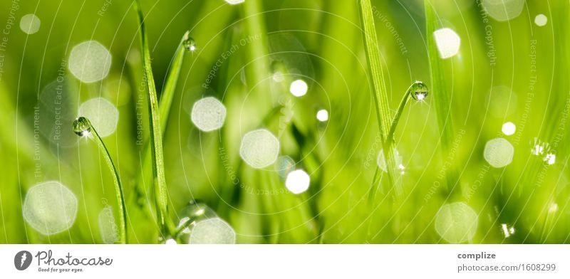 Green Fresh Grass Wellness Wohlgefühl Kur Spa Sommer Natur Pflanze Wassertropfen Garten Wiese frisch nass grün Halm Tau Tropfen natürlich Panorama (Bildformat)