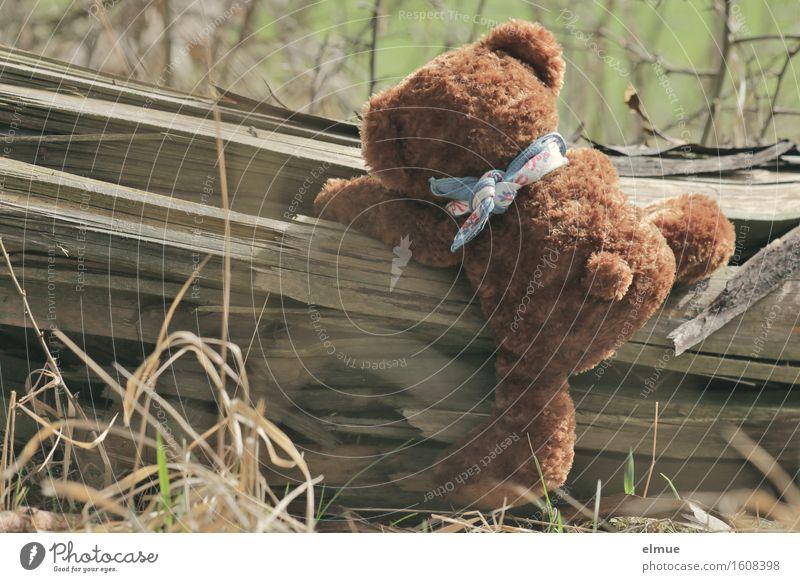 Teddy Per im Wald (3) Ausflug Abenteuer Klettern trimm dich Baumstamm Spielzeug Teddybär Stofftiere entdecken Spielen Sport kuschlig niedlich sportlich braun