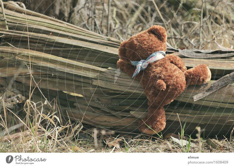 Teddy Per im Wald (1) Natur Freude lustig Sport Holz Freizeit & Hobby frei Kraft Energie Lebensfreude niedlich Abenteuer Baumstamm entdecken Klettern