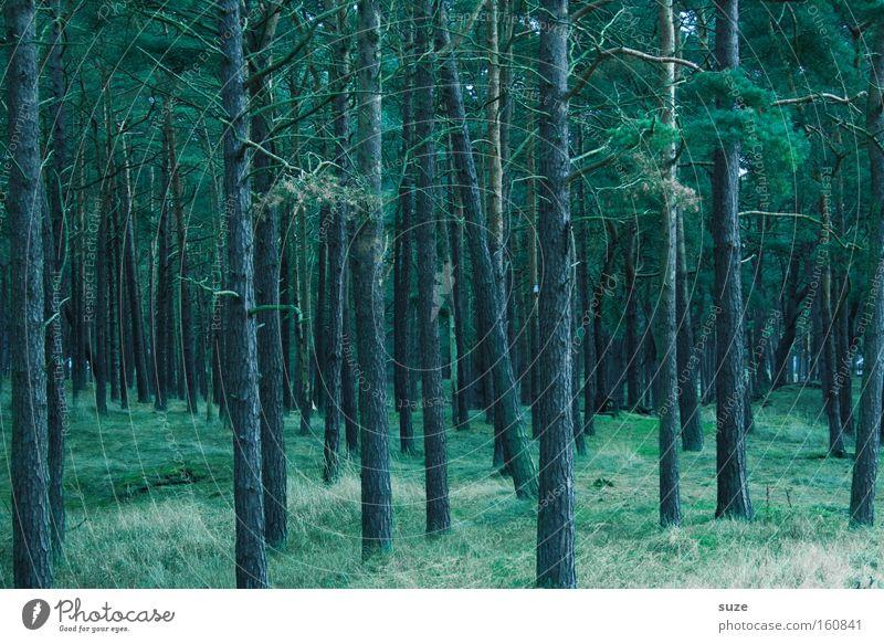 Zauberwald Landwirtschaft Forstwirtschaft Umwelt Natur Landschaft Urelemente Erde Baum Wald Wachstum dunkel hoch kalt grün Stimmung Einsamkeit nachhaltig