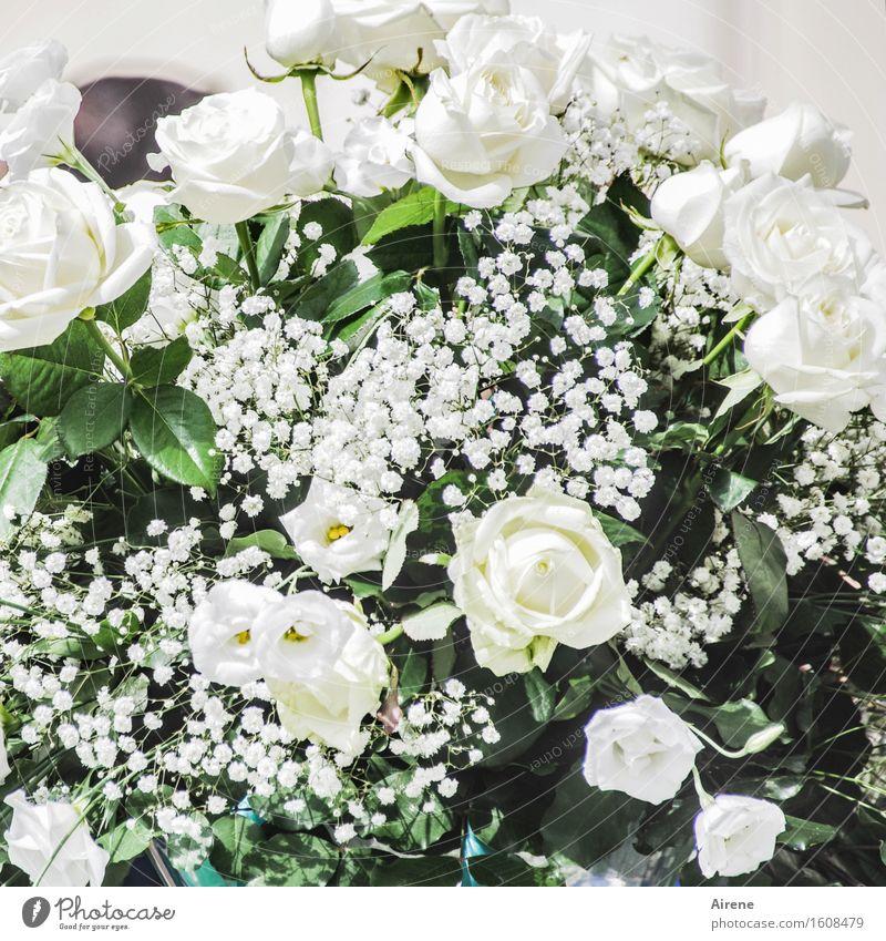 weißblütig Feste & Feiern Hochzeit Blume Rose Blumenstrauß Blütenpflanze Blühend ästhetisch Duft elegant positiv reich viele grün Gefühle Stimmung Glück