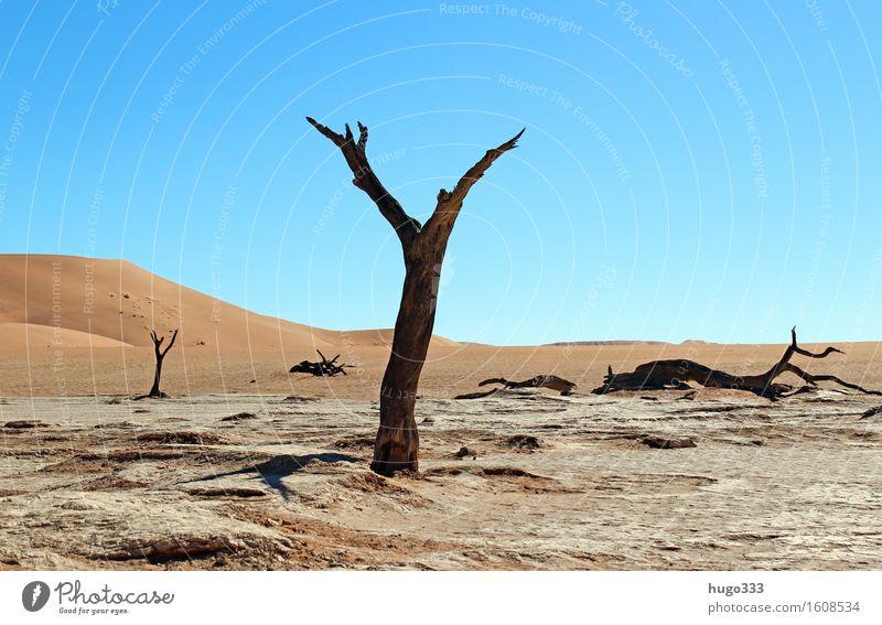 Mein Freund der Baum Umwelt Natur Landschaft Urelemente Erde Sand Himmel Klima Wetter Dürre Pflanze Wüste Namib Namibia heiß hell trist trocken Wärme Tod