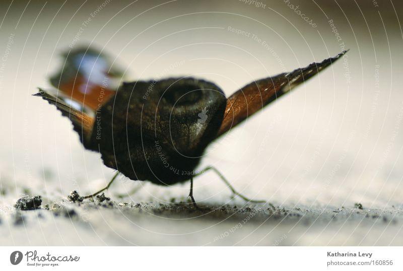 last flight Tier klein Flügel Insekt Flugzeugstart Schmetterling Flugzeuglandung Abheben
