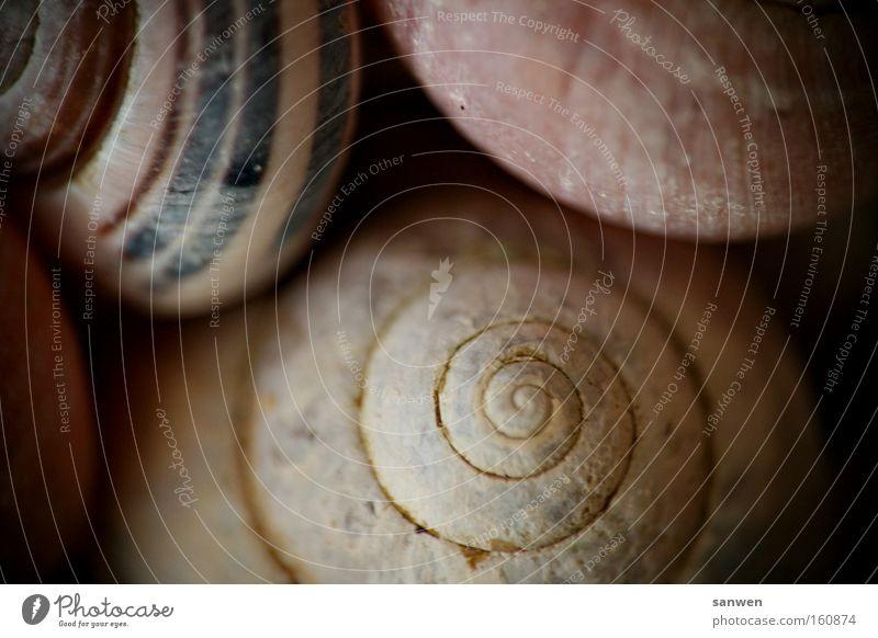 schneckenkuscheln Natur Tier Dekoration & Verzierung Spirale Muschel Schnecke Intimität Kuscheln langsam Weichtier Schneckenhaus