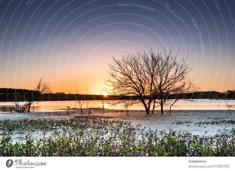 Mückenstunde Himmel Pflanze blau Wasser Baum Sonne Landschaft Herbst Schwimmen & Baden Horizont glänzend Luft frisch wandern ästhetisch Sträucher