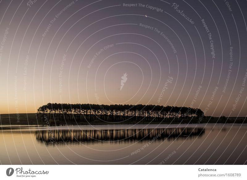 Nacht bricht an Freude Angeln Ausflug Abenteuer wandern Wassersport Schwimmen & Baden Landschaft Pflanze Himmel Wolkenloser Himmel Nachthimmel Horizont Mond