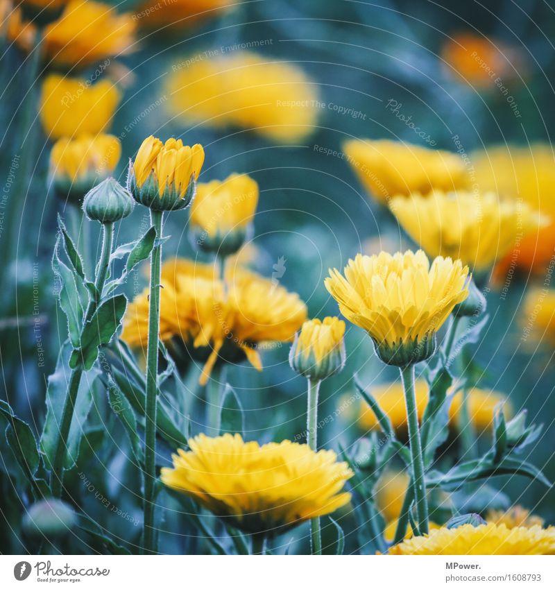 flowerpower Natur Pflanze Blume Blatt Tier Umwelt gelb Blüte Wiese Gras Garten hell Park verrückt Sträucher Blühend
