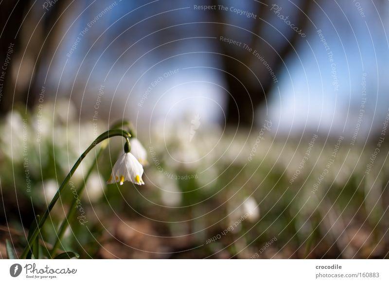 Frühlingsanfang schön weiß Baum Blume Frühling Wärme Wachstum Vergänglichkeit Blühend aufwachen austreiben