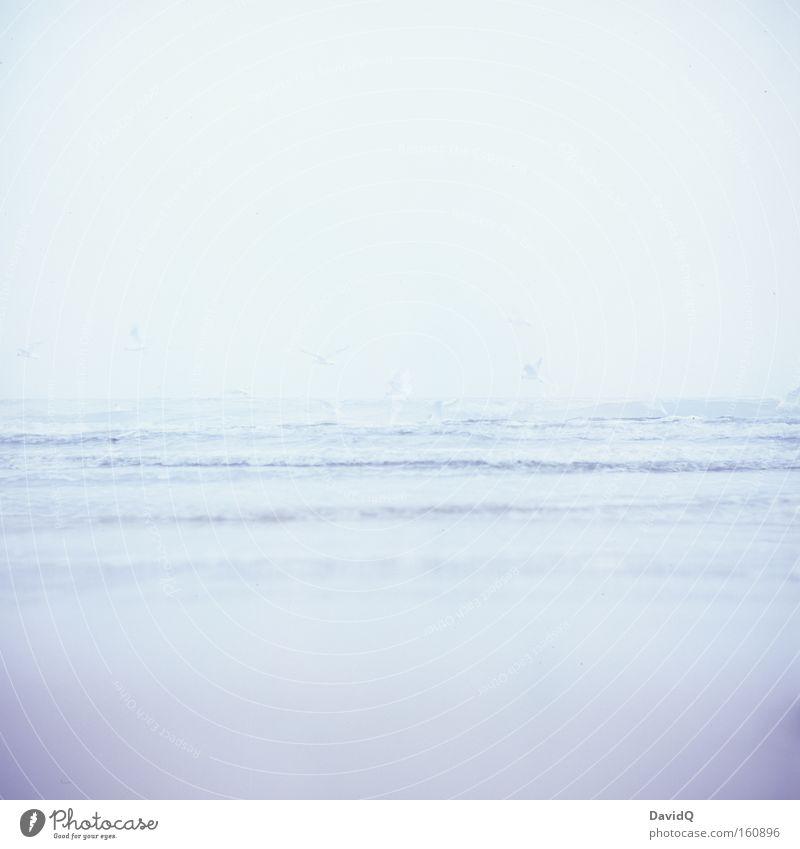 weniger ist meer Meer See Ostsee Wasser Wellen Küste Strand Sand Vogel Möwe tief Ferne Horizont Fernweh Lomografie