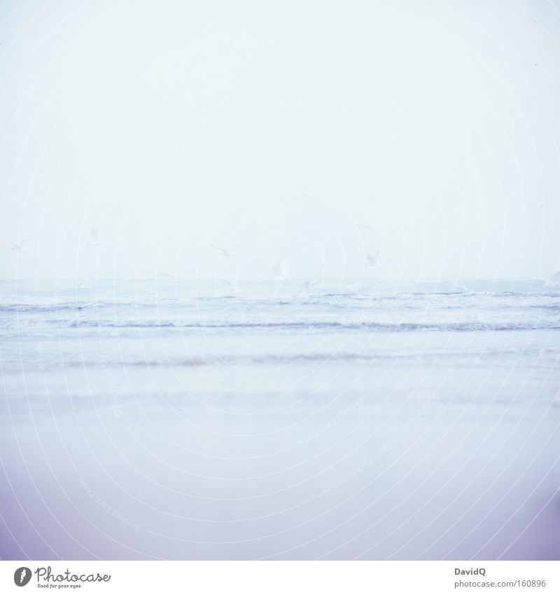 weniger ist meer Wasser Meer Strand Ferne See Sand Vogel Küste Wellen Horizont tief Ostsee Möwe Fernweh