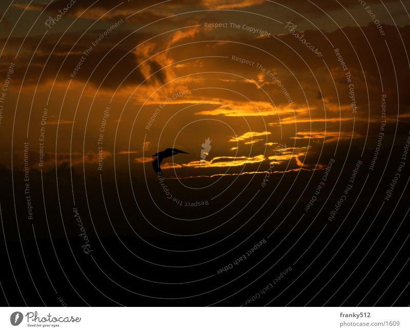 Sonnenuntergang Wolken orange Vogel Insel Abenddämmerung