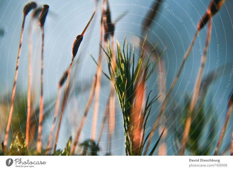 Farben des Frühlings Natur Pflanze Wachstum Stengel Halm