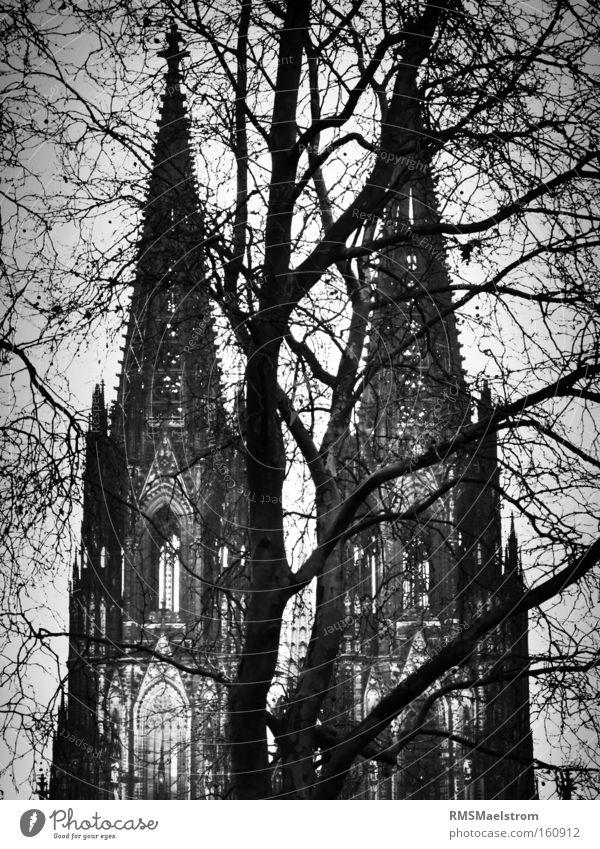 Der Kölner Dom Kirche Deutschland Sehenswürdigkeit Baum abstrakt Schwarzweißfoto dunkel Gotteshäuser kölner dom wwII