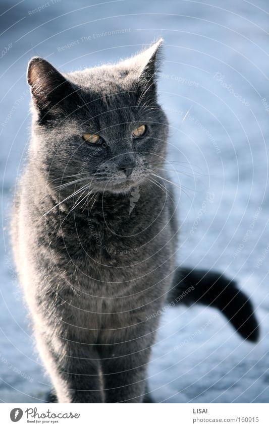 sepp Farbfoto Außenaufnahme Tag Schatten Kontrast Sonnenlicht Sonnenstrahlen Tierporträt Winter Schnee Natur Schönes Wetter Fell Katze 1 beobachten hören