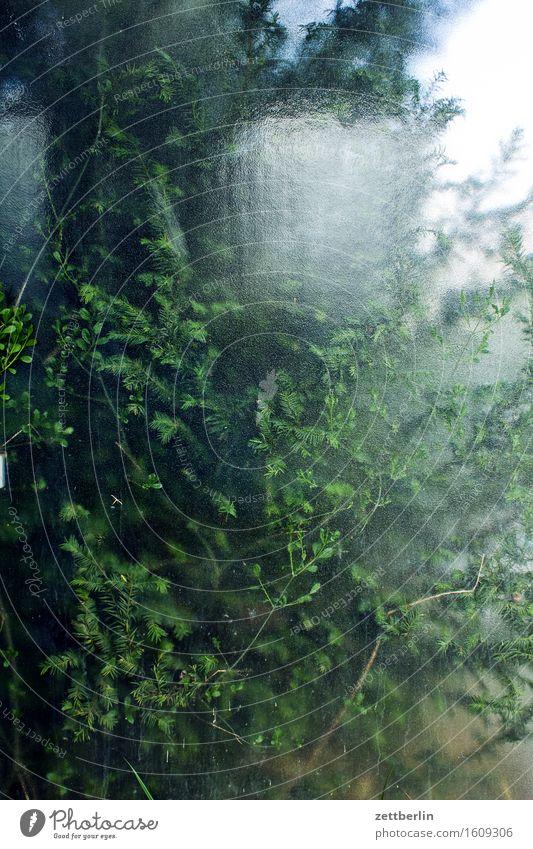 Busch hinter Glas Frühling Landschaft Natur Pflanze Sträucher Blatt Ast Zweig Fensterscheibe Scheibe Glasscheibe durchsichtig Klarheit grün Blattgrün Unschärfe