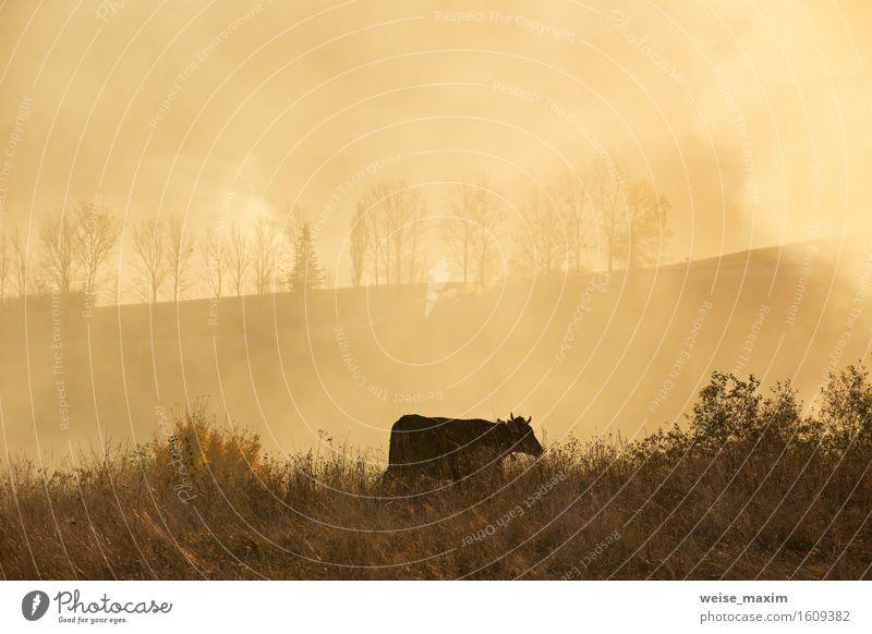 Eine Kuh auf einem Feld. Sonniger nebelhafter Tag in Hügel Sommer Berge u. Gebirge Natur Landschaft Himmel Herbst Wetter Nebel Baum Gras Wiese Fressen grün