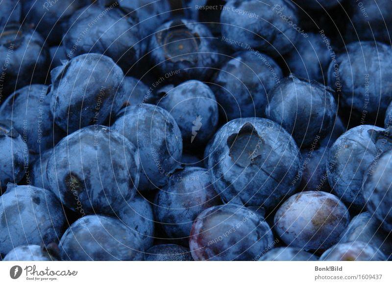 Blaubeerland blau Sommer schön Gesunde Ernährung Freude dunkel schwarz Leben Essen Gesundheit Glück Frucht wild frisch ästhetisch Lebensfreude