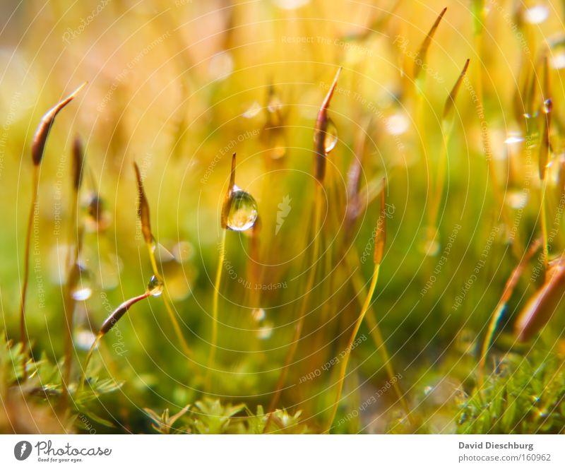 Mother natures tears Natur Pflanze grün Sommer Farbe Wasser gelb Frühling Gras Regen Wassertropfen nass Boden Tropfen Halm Moos