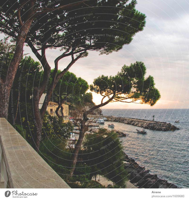 zwielicht Sonnenaufgang Sonnenuntergang Baum Pinie Meer Hafen Sorent Italien Fischerdorf Schifffahrt Fischerboot maritim positiv braun gold grün Idylle