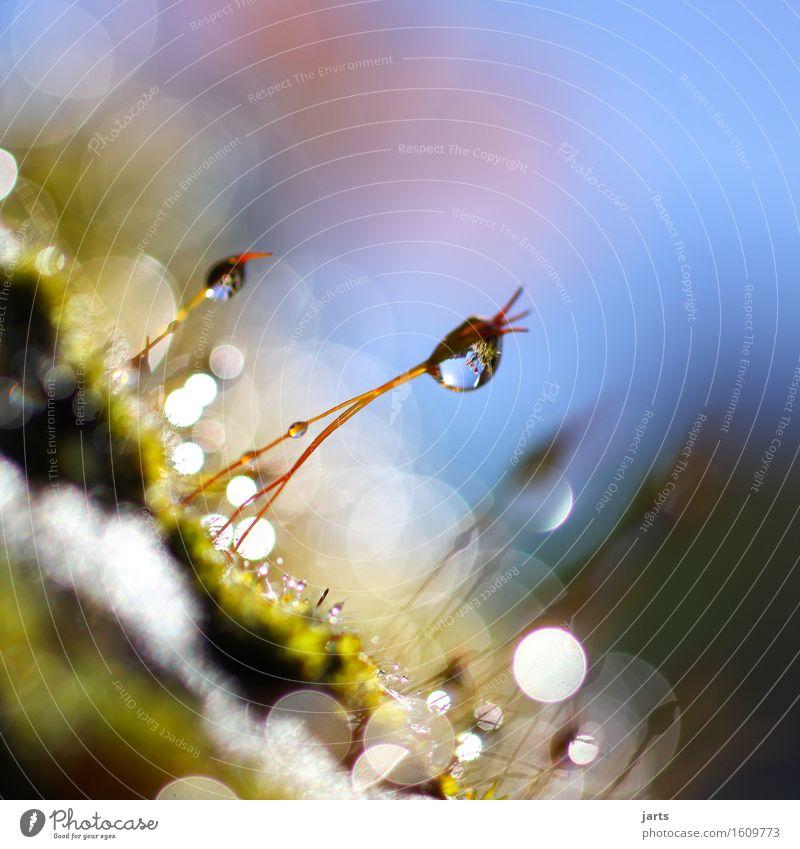 schieflage Pflanze Wassertropfen Himmel Frühling Schönes Wetter Gras Moos Grünpflanze Wildpflanze Garten Park Wiese hängen Flüssigkeit frisch glänzend hell