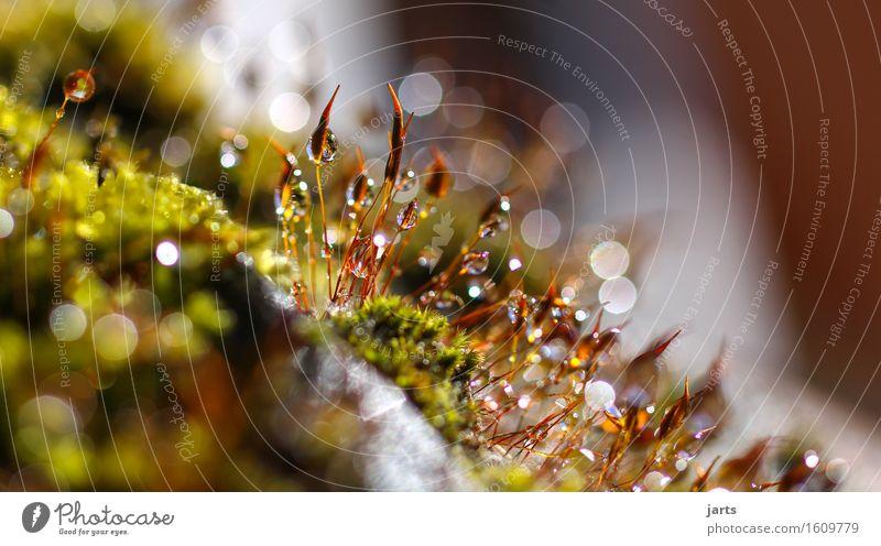 kleinigkeiten Umwelt Wassertropfen Schönes Wetter Pflanze Moos Garten Park Flüssigkeit frisch glänzend hell schön nass natürlich Gelassenheit geduldig ruhig