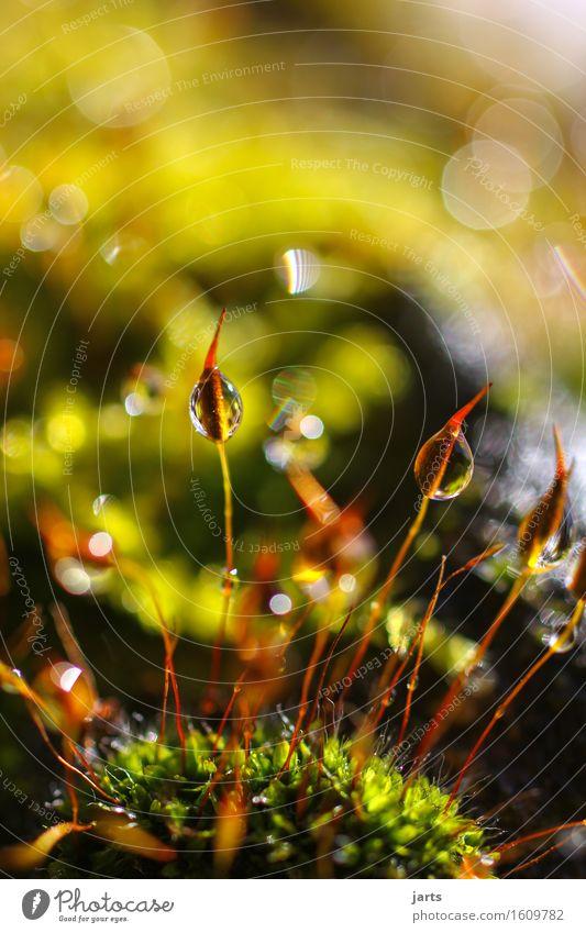kleinigkeiten II Wassertropfen Frühling Schönes Wetter Moos Flüssigkeit frisch nass natürlich Natur Tau Farbfoto mehrfarbig Außenaufnahme Nahaufnahme