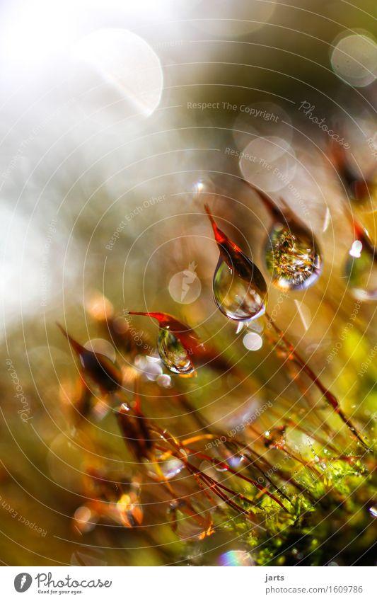 tagtraum Natur Pflanze schön Wasser ruhig Wiese natürlich Gras Garten hell Park glänzend frisch Wassertropfen nass Schönes Wetter