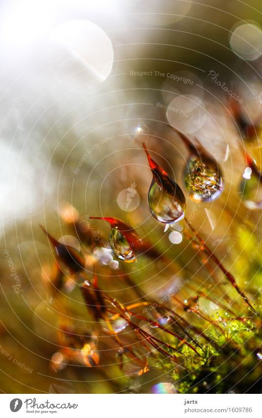 tagtraum Natur Pflanze Wasser Wassertropfen Schönes Wetter Gras Moos Grünpflanze Wildpflanze Garten Park Wiese Flüssigkeit frisch glänzend hell schön nass