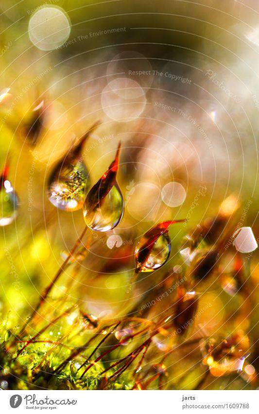 tagtraum II Natur Pflanze Wassertropfen Schönes Wetter Moos Garten Park authentisch Flüssigkeit frisch glänzend hell nass natürlich schön Vorsicht Gelassenheit