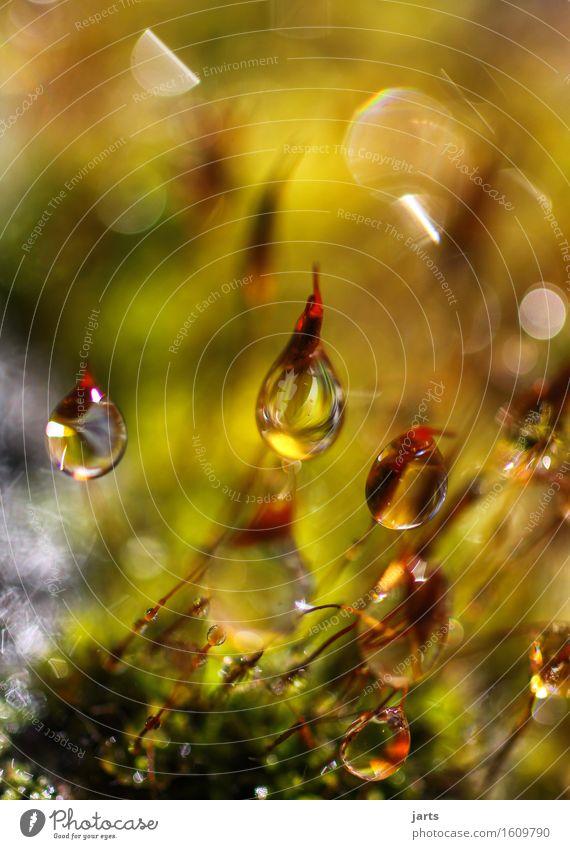 kleine schönheit Natur Wassertropfen Schönes Wetter Pflanze Moos Garten Park frisch glänzend hell nass natürlich Gelassenheit geduldig ruhig Tau Farbfoto