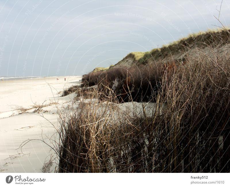 Düne Strand Stranddüne Wasser Insel Pflanze Nordsee
